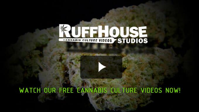 Watch RuffHouse Studios Free Cannabis Culture Videos Now!
